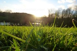 Gras op een heuvel